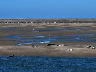 Visiter les Hauts-de-France dans une nature préservée, sur la côte