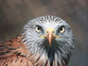 conseil de membre HomeExchange : visiter le parc animalier d'Auvergne