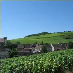 Faire la route des vins en Bourgogne cet été