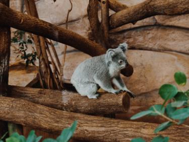 Echange de maison vacances en famille zoo de Beauval