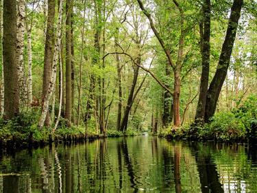 Spreewald: das grüne Venedig